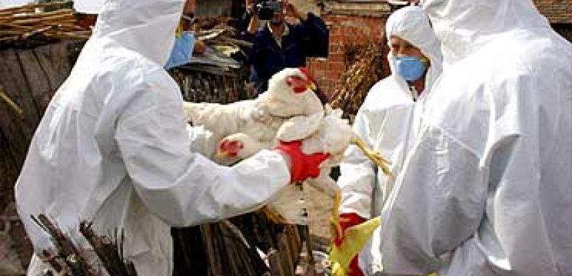 U našoj zemlji nije bilo ni sumnji na ptičji grip