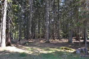 Suša, jedan od uzroka umiranja šuma