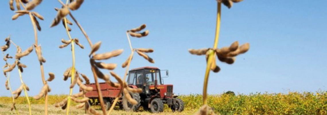 Paorima po hektaru tri puta manje para