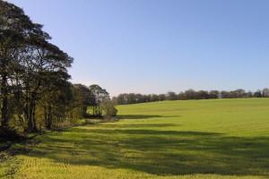 Restitucija: Država vraća 100.000 hektara