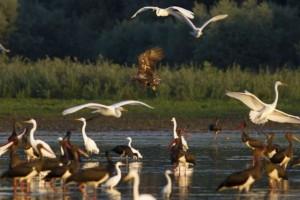 Zaštita prirode zadatak svih