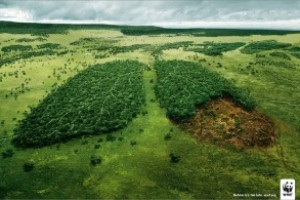 Opštine nedovoljno troše na životnu sredinu
