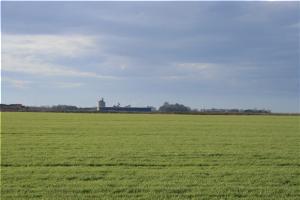 Vojvođanski paori se vratili pšenici