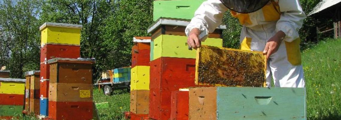 Pčelari prepolovili izvoz meda