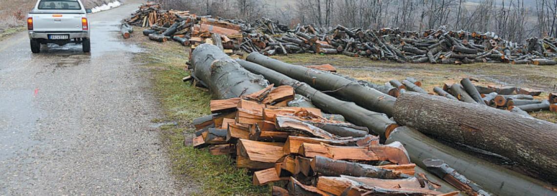 Obaveštenje o nastalim štetama u šumama