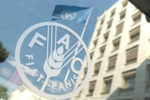 Uloga FAO Investicionog centra u razvoju poljoprivrede