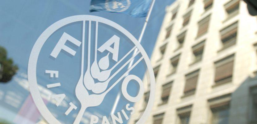 Selaković u Rimu o jačanju saradnje Srbije i FAO