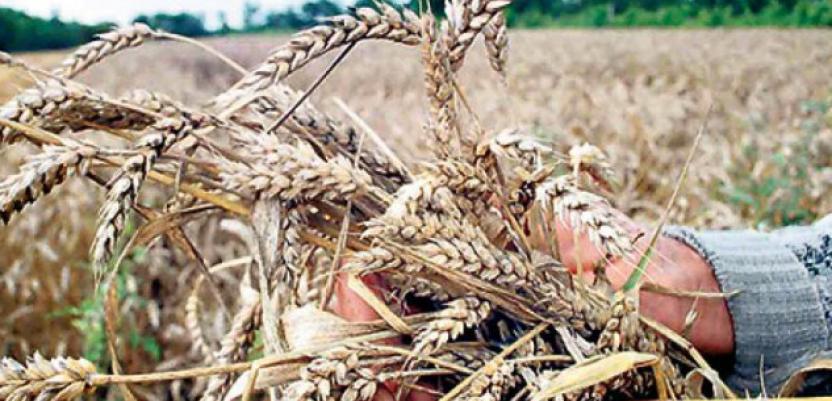 Mali: Rešićemo pitanje PIO za poljoprivrednike