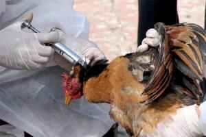 Makedonija: Stop za bugarsku živinu