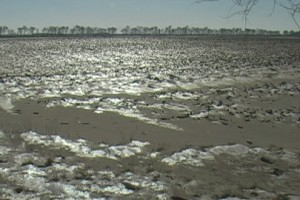 Srbija mora da reši problem vetrozaštitnih pojaseva