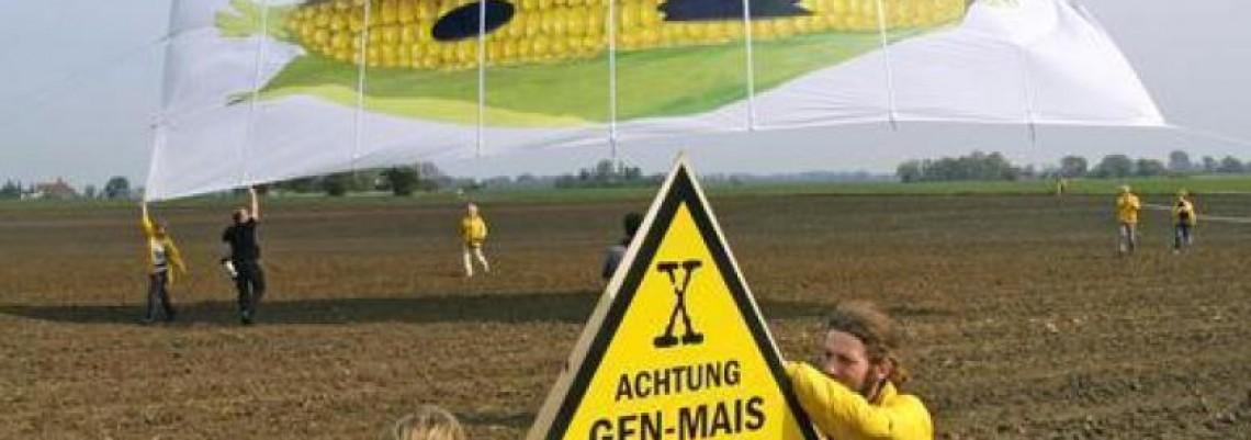 Nesuglasice oko GMO u nemačkoj vladi