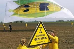 Predlogom Brisela o GMO svi nezadovoljni