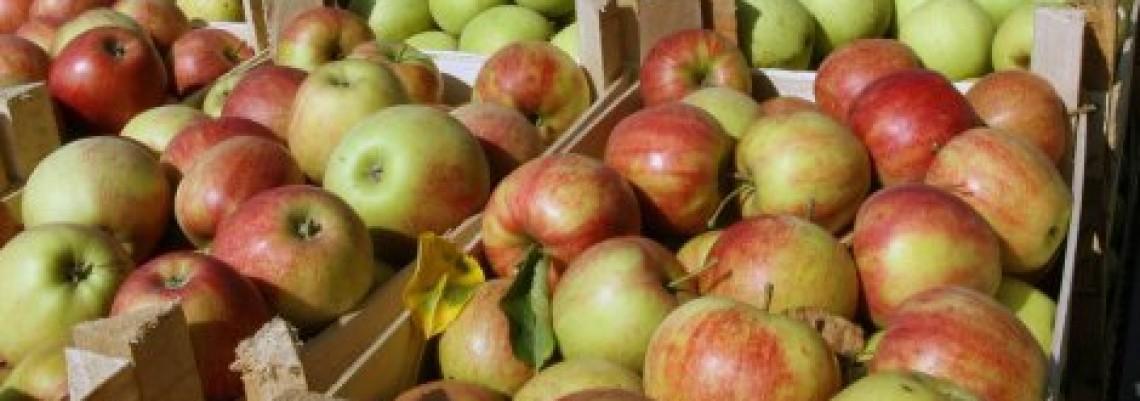 Lažne srpske jabuke na putu za Rusiju