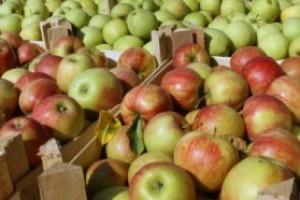 Ukrajinci švercuju svoje jagode kao srpske u Rusiju