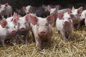 Politički dijalog u oblasti mesa i mleka