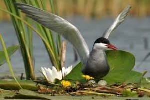Skup o zaštiti životne sredine