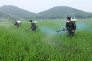 Poljoprivredno zemljište u Kini prekomerno zagađeno pesticidima