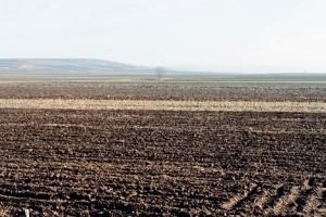 Bugarski: Obići i Arape koji nisu uzorali