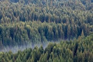 Prašume se uništavaju, a Zemlja sve zelenija