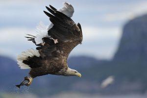 U Srbiji stradalo više od 220.000 jedinki divljih ptica