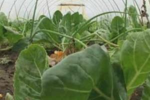 Sertifikacija 1.800 hektara za organsku proizvodnju u Mokrinu