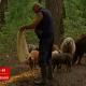 Ruralni život kao svetski trend