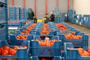 COPA AND COGECA CALLING FOR SUPPORT FOR EU FRUIT AND VEGETABLE PRODUCERS