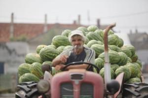 """Srpske bostandžije """"pucaju"""" zbog uvoznih lubenica"""