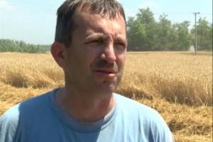 Kiš: Sačekati sa prodajom ovogodišnjeg roda pšenice