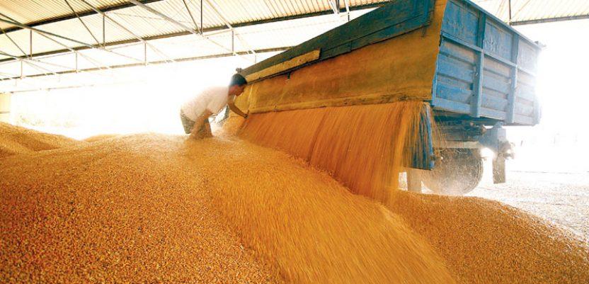 Smernice za prevenciju zaraze virusom korona u lancu snabdevanja žitom