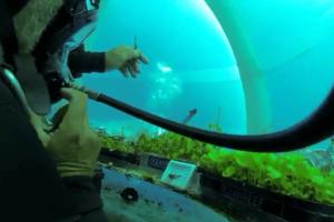 Podvodno gajenje bosiljka