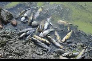 Masovni pomor ribe u Arilju, za sada uzrok nepoznat