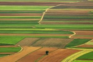 Vojvodina: Raspisano pet konkursa u oblasti poljoprivrede