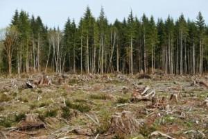 U 2014. izgubljeno 18 miliona hektara šuma