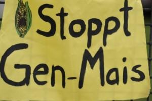 Ni Nemačka neće GMO