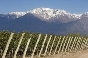 Promene klime pretnja proizvodnji vina EU