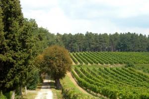 Dug put do boljeg položaja vinogradara u Srbiji