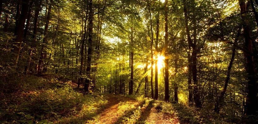 Danas je Svetski dan šuma