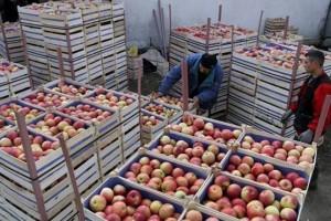 Izvoz voća i povrća u EU i dalje bez carine