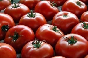 Značajno povećanje izvoza svežeg paradajza