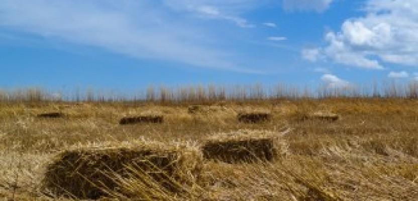 Doneta uredba o uslovima zakupa državnog zemljišta