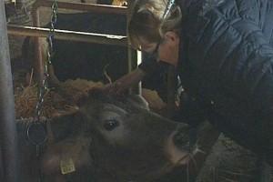 Farma krava koju vode žene