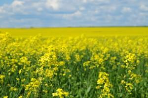 Paori od države mogu da kupe 20 hektara