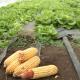 Organska hrana zaustavlja propadanje sela