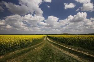 Rekordan zakup državnog poljoprivrednog zemljišta