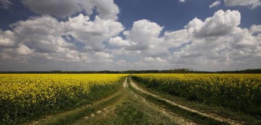 Sombor daje u arendu 10.588 hektara