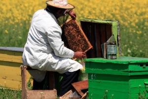 Softver povezuje pčelare i poljoprivrednike