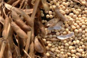 Zaštita porekla za bolji izvoz soje