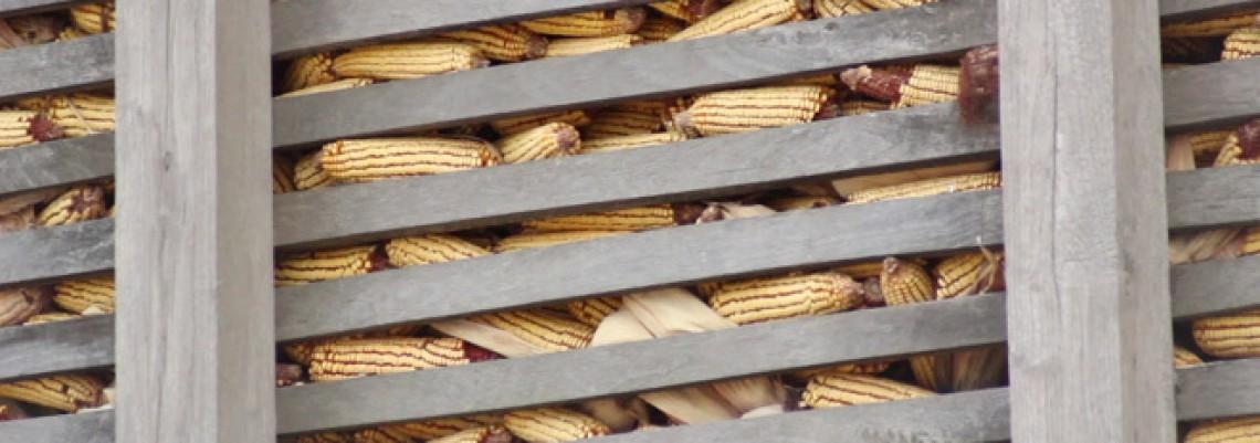 Muka za paore: Cene poljoprivrednih proizvoda na višegodišnjem minimumu