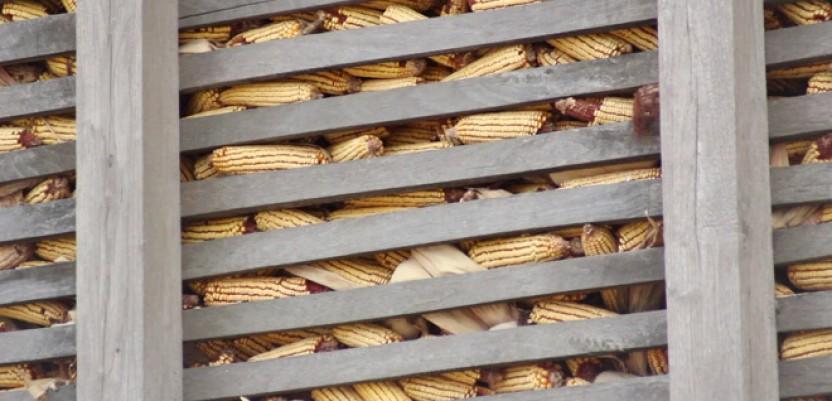 Kukuruz najatraktivnija roba na berzanskom tržištu